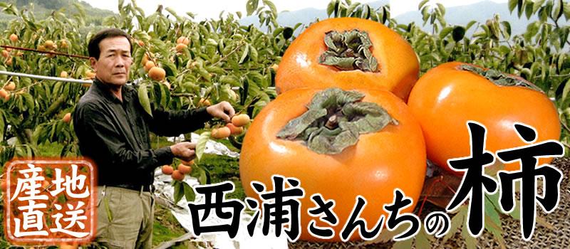 西浦さんちの種なし柿